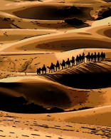 camel-caravan-in-desert-tall-l