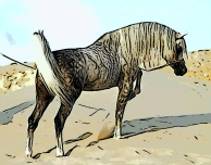 dappled-arabian